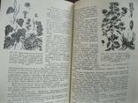 Культивируемые и дикорастущие лекарственные растения 1974г., фото №7