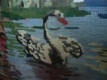 Лебедь плавает в озере, фото №12