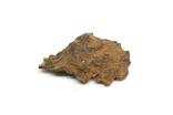 Залізний метеорит Sikhote-Alin, 15,0 грама, з сертифікатом автентичності, фото №5