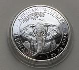 Слон Сомали 2021, фото №2