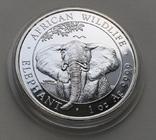 Слон Сомали 2021, фото №4