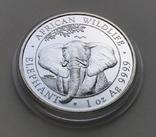 Слон Сомали 2021, фото №6