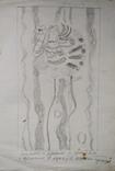 "Л.Ястреб ""Монументальный эскиз"",б.карандаш,31х21см,1970-е гг., фото №2"