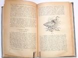 Записки ружейного охотника. С.Т. Аксаков. 1953 год, фото №4