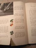 Детское питание 1966р, фото №10