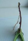 Елочная игрушка Козел со скрипкой СССР 1969 г., фото №4