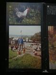 Комплект открыток СССР. Птичий двор. 1989г., фото №4