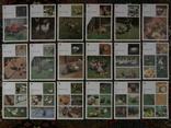 Комплект открыток СССР. Птичий двор. 1989г., фото №9