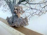 Чёрный коралл ветка 38 х 42 см из Индийского океана. 4., фото №9