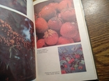 Овочі і фрукти в нашому харчуванні 1988, фото №3