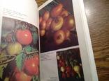 Овочі і фрукти в нашому харчуванні 1988, фото №6