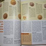 2006 Все салаты, рецепты. Кулинария (большой формат), фото №12