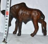 Антилопа гну., фото №2
