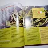 2006 Быстро, просто, вкусно, рецепты (кулинария, большой формат), фото №6