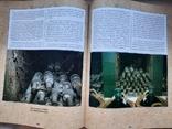 Век под крылом белого аиста. Историко-документ. издание (на рус. и англ. языках), фото №11