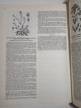 1980 Атлас ареалов и ресурсов лекарственных растений СССР (большой формат), фото №10