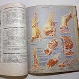 1969 Книга о вкусной и здоровой пище. Пищевая промышленность. Кулинария, фото №9