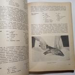 1958 Польская кухня, кулинария, рецепты, фото №10