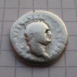 Денарий, Веспасиан (реверс - свинья), фото №2