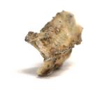 Фрагмент фульгурита, 3,6 грам, з сертифікатом автентичності, фото №10
