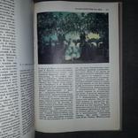 Краткая история искусств 2 выпуска 1991-1993 Н.А. Дмитриева, фото №9