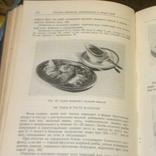 Кулинария, изд-во: Торговой литературы, Москва - 1955, тираж 60 тыс., фото №12