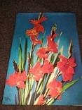 Стерио-объёмная открытка цветы, фото №2