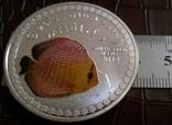 5000 франків 2014 року Бурунді -копія /посрібнення 999/, фото №2
