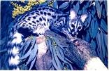 Полосатый линзанг, фото №2