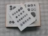 Монеты и Печати Византийского Херсона. И. В. Соколова, фото №8