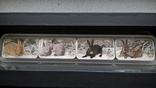Набор монет год кролика 2011, фото №2