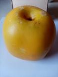 Муляж яблоко, фото №2