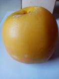 Муляж яблоко, фото №7