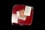 Настольные медали с гербом УССР (УРСР). 100 штук. 1980-е., фото №5