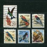 США, птицы (подборка), фото №2