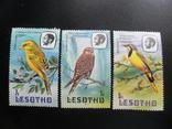 Фауна. Лесотто. 1982 г. Птицы. MLH, фото №2