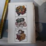 Овощи и фрукты на вашем столе 1987р., фото №6