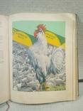 Книга о вкусной и здоровой пище., фото №8