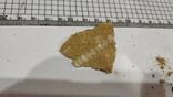Морские лилии окаменелость, фото №4