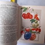 Домашние заготовки 1959р., фото №5