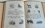 Le Livre d'or. Книга для дітей із вивченям французької мови.1890р., фото №10