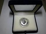 "Монета 50 центов Австралия ""Год свиньи"", 2007 го, серебро, фото №5"