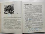 Домашнее приготовление тортов пирожных печенья пряников пирогов Р.П. Кенгис, фото №7