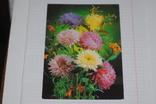Открытка Цветы Польша, фото №2
