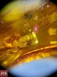 Янтарный кулон с инклюзами #15, фото №4
