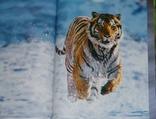 Животные. Живая природа глазами фотографа., фото №9