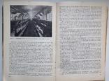 1981 Основы промышленной технологии производства продуктов животноводства, фото №13