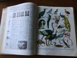 Український Радянський Енциклопедичний Словник том №3 1987 р, фото №3