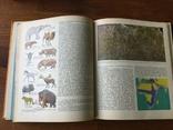 Животный мир земли У. Зедлаг 1975 г, фото №6