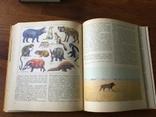 Животный мир земли У. Зедлаг 1975 г, фото №7
